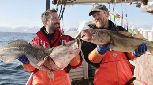 Dr Derek Muller cod fishing in Norway